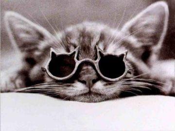 gatto-occhiali