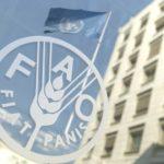 Stage alla FAO in tutto il mondo