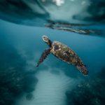 Global Risks Report 2019: il commento del WWF