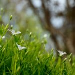 10 idee originali per trascorrere il 1° maggio