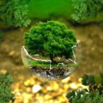 300 alberi per la più grande opera d'arte pubblica d'Austria. La firma Klaus Littmann