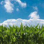 Funzionario agrario. Al Ministero politiche agricole un concorso per 35 assunzioni a tempo indeterminato