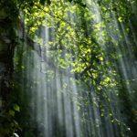La Norvegia e la Germania hanno interrotto i finanziamenti al fondo governativo brasiliano che si occupa della conservazione dell'Amazzonia