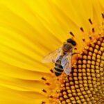 Pesticidi, presto lo stop in Europa