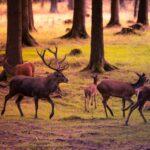 Concorso pubblico per Guardia del corpo forestale regionale