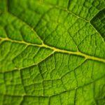 Tutelare la salute umana conservando la biodiversità